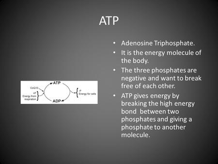 ATP Adenosine Triphosphate. It is the energy molecule of the body. The three phosphates are negative and want to break free of each other. ATP gives energy.