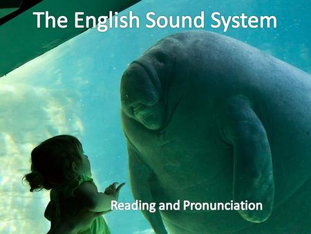 What is the Phonology? Phonetics all of the sounds Phonemics significant sounds Phonics teaching reading sounds.