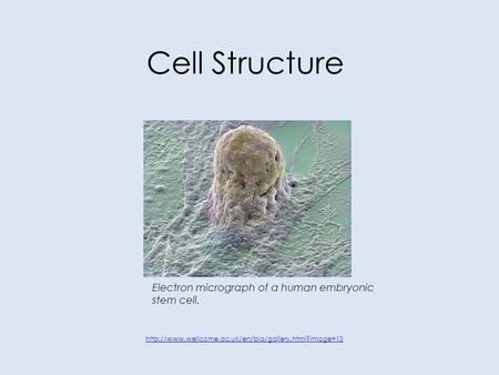 Cell Structure Electron micrograph of a human embryonic stem cell.