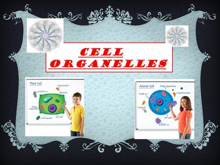 CELL ORGANELLES. Cell Wall  Cell wall is strong and is made cellulose wall outside the plasma membrane of plant cells. The cell wall locate in Plant,