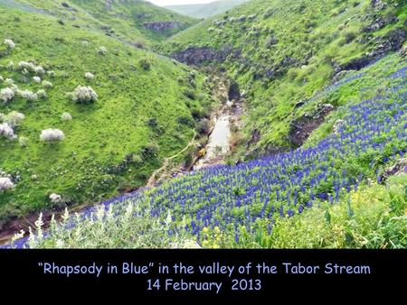"""Rhapsody in Blue"" in the valley of the Tabor Stream 14 February 2013."