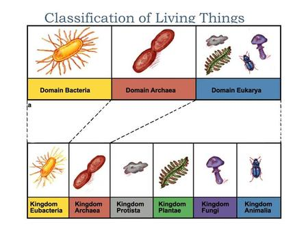 Classification of Living Things Why do we classify things?  Supermarket aisles  Libraries  Classes  Teams/sports  Members of a family  Roads 