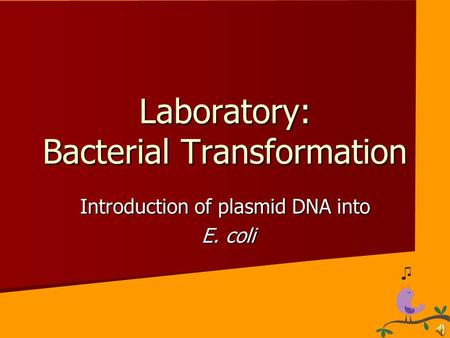 an introduction to molecular biology bacterium escherichia coli Transfer in escherichia coli (e coli) bacteria are simple and appropriate for the teaching one common technology, transitioned from the ap biology lab manual (2001) t144 about plasmids and transformation that might have been raised during the initial.