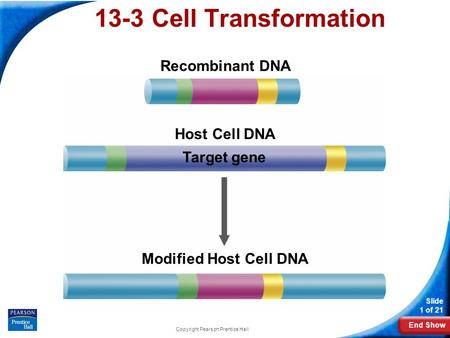 End Show Slide 1 of 21 Copyright Pearson Prentice Hall 13-3 Cell Transformation Recombinant DNA Host Cell DNA Target gene Modified Host Cell DNA.
