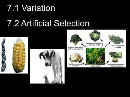 7.1 Variation 7.2 Artificial Selection. 2 What causes VARIATION? Remember Genetics 3.