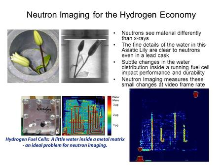 Neutron Imaging for the Hydrogen Economy Neutrons see material differently than x-rays The fine details of the water in this Asiatic Lily are clear to.