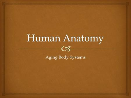 Aging Body Systems.   Oil & sweat glands decrease  Circulation to skin decrease  Nails become brittle  Fatty tissue decrease  Sensitive to temp.