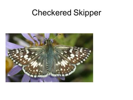 Checkered Skipper. House Fly Crane Fly Syphrid Fly.