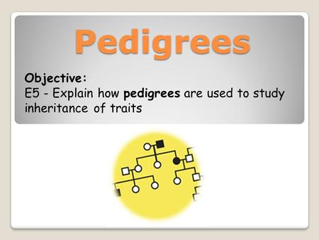 Pedigrees Objective: E5 - Explain how pedigrees are used to study inheritance of traits.