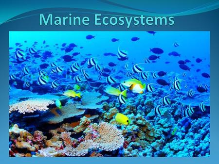 Ecology and Ecosystems Marine ecology studies the relationships and interactions of the abiotic and biotic aspects of the environment Abiotic.