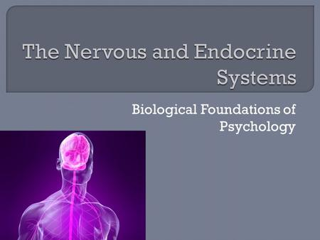 Biological Foundations of Psychology  Central Nervous System – Brain and Spinal Cord 99% of all nerve cells  Peripheral Nervous System – Network.