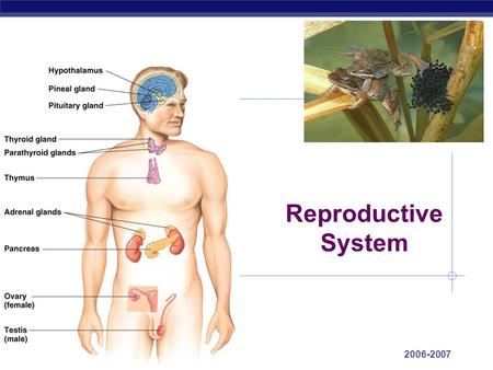 AP Biology 2006-2007 Reproductive System Regents Biology Sex & Growth Hormones Large scale body changes  how do they work turn genes on start new processes.