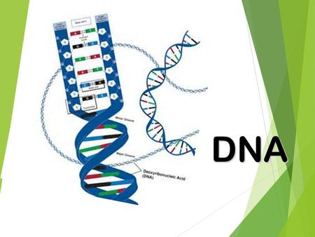 DNA History  Genetics is the study of genes.  Inheritance is how traits, or characteristics, are passed on from generation to generation.  Chromosomes.
