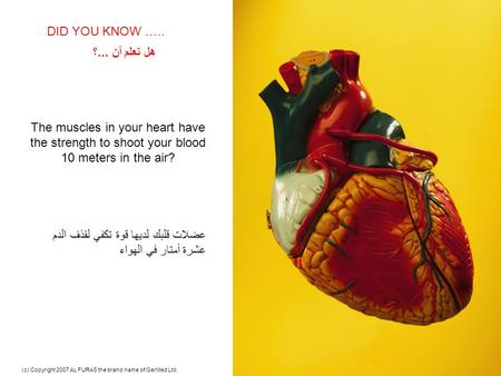 - Excellence in Healthcare - (c) Copyright 2007 AL FURAS the brand name of GerMed Ltd.1 The muscles in your heart have the strength to shoot your blood.