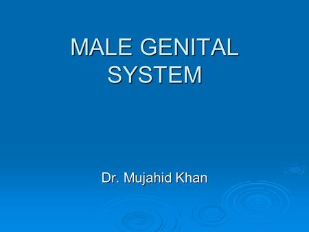 MALE GENITAL SYSTEM Dr. Mujahid Khan. Development of Gonads The gonads are derived from 3 sources: The gonads are derived from 3 sources:  The mesothelium.