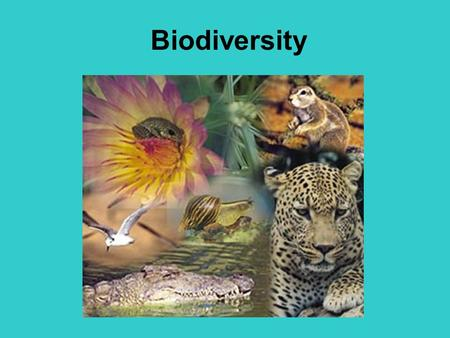 Biodiversity Objectives: To explain the process of evolution by natural selection To define adaptation.