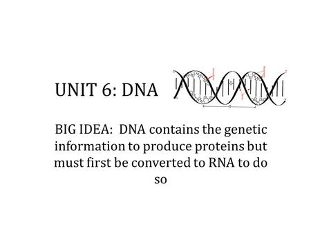 UNIT 6: DNA BIG IDEA: DNA contains the genetic information to produce proteins but must first be converted to RNA to do so.