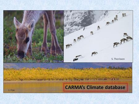 CARMA's Climate database J. Fox L. Witter S. Thorisson.