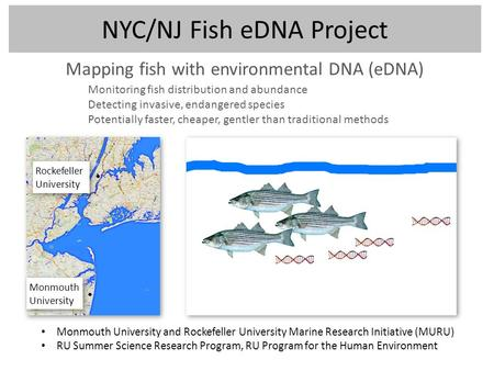 NYC/NJ Fish eDNA Project Mapping fish with environmental DNA (eDNA) Monmouth University and Rockefeller University Marine Research Initiative (MURU) RU.