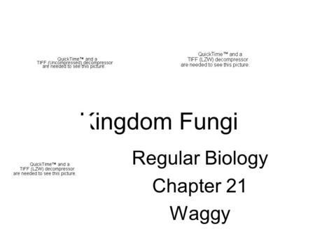 Kingdom Fungi Regular Biology Chapter 21 Waggy. Chapter Objectives 1. List the characteristics of fungi 2. Describe how fungi obtain food 3. Compare the.