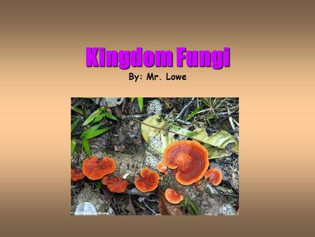 Kingdom Fungi Kingdom Fungi By: Mr. Lowe Important New Vocabulary Hyphae = Mass of many-celled, threadlike tubes forming the body of a fungus. Spores.