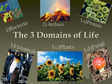The 3 Domains of Life 3.d)Fungi 3.c)Plants 1)Bacteria 3.b)Animals 3.a)Protists 2) Archaea.