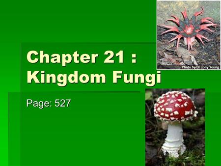 Chapter 21 : Kingdom Fungi Page: 527. What types of Fungi do you know?  Bread Molds  Mushrooms  Molds on oranges  Yeasts  Mildews  Rusts & Smuts.