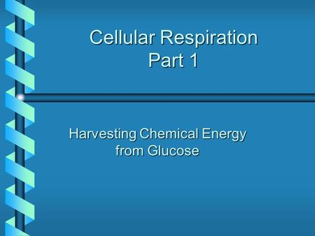 Cellular Respiration Part 1 Harvesting Chemical Energy from Glucose.