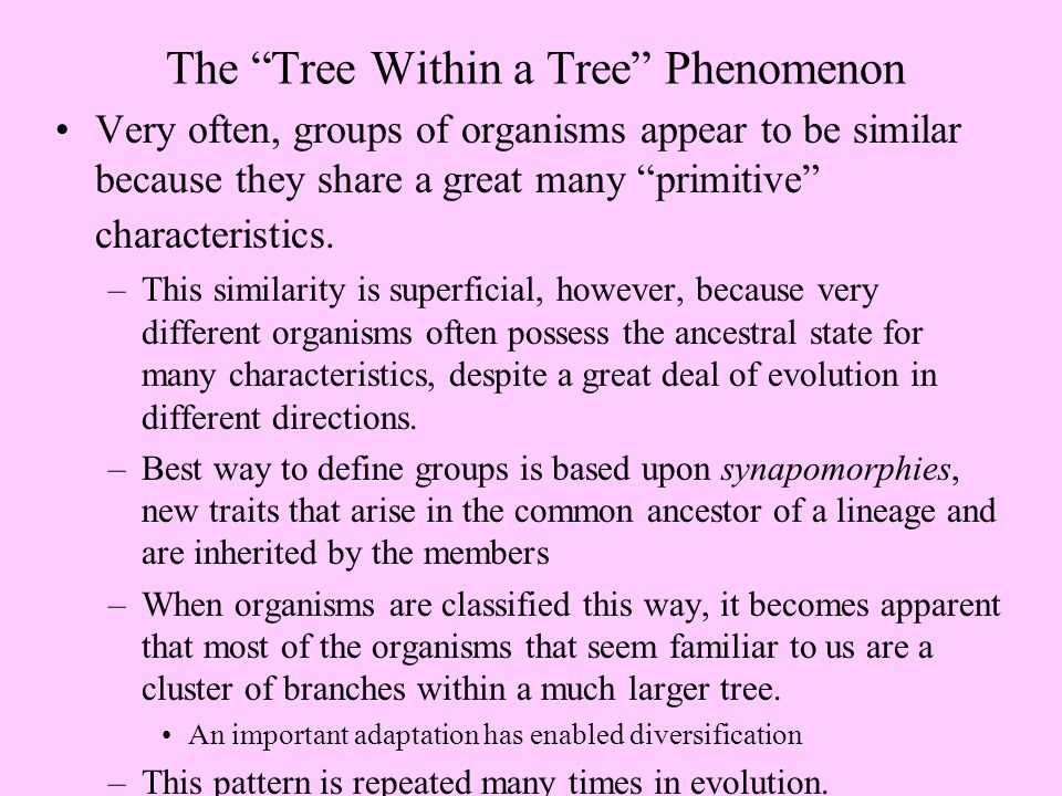The Tree Within a Tree Phenomenon Very often, groups of organisms appear to be similar because they share a great many primitive characteristics.
