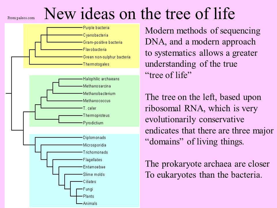 New ideas on the tree of life Modern methods of sequencing DNA, and a modern approach to systematics allows a greater understanding of the true tree of life The tree on the left, based upon ribosomal RNA, which is very evolutionarily conservative endicates that there are three major domains of living things.