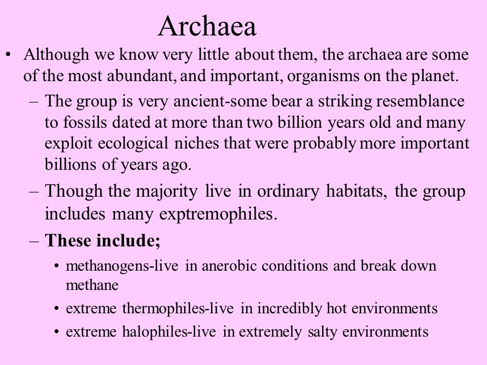 Archaea Although we know very little about them, the archaea are some of the most abundant, and important, organisms on the planet.