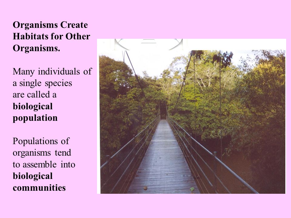 Organisms Create Habitats for Other Organisms.