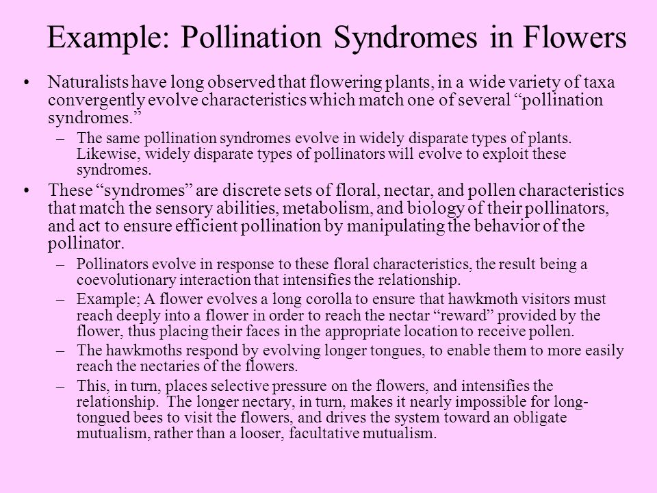 Example: Pollination Syndromes in Flowers Naturalists have long observed that flowering plants, in a wide variety of taxa convergently evolve characteristics which match one of several pollination syndromes. –The same pollination syndromes evolve in widely disparate types of plants.