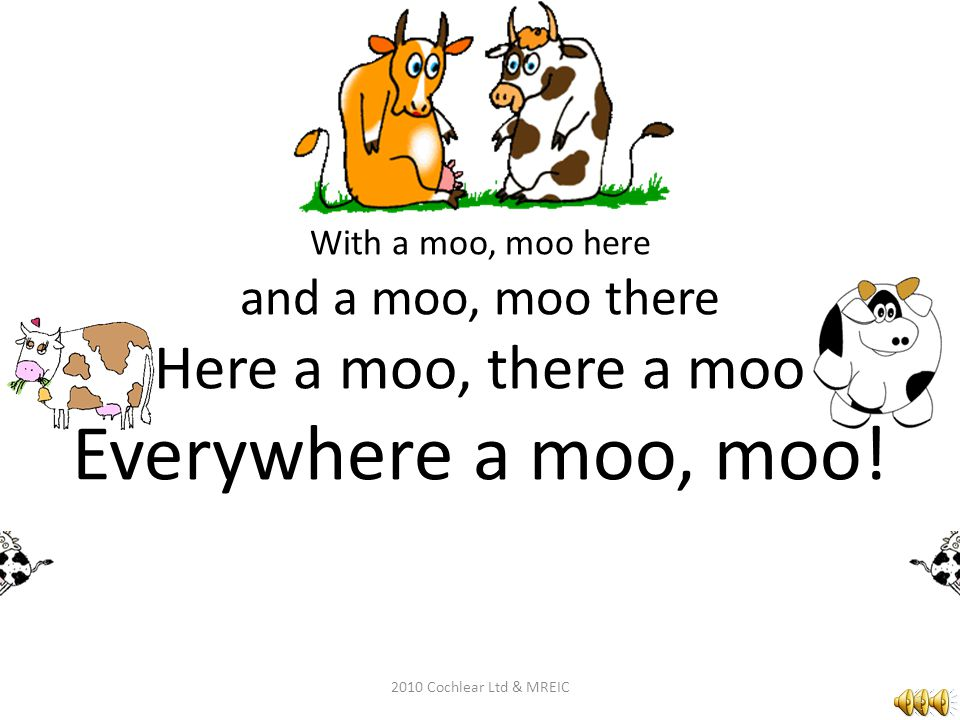 With a moo, moo here and a moo, moo there Here a moo, there a moo Everywhere a moo, moo.