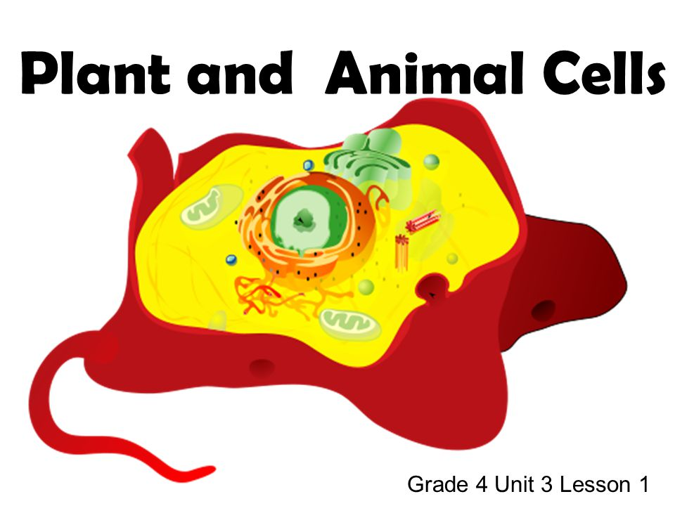 Topics Covered… cell definition parts of plant and animal cells comparison of plant and animal cells different types of animal cells