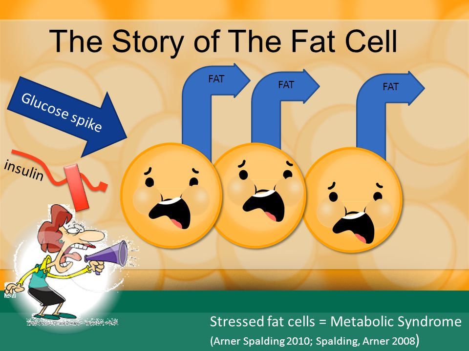 The Story of The Fat Cell Origins of Metabolic Syndrome (Arner Spalding 2010; Spalding, Arner 2008 ) Fatty Liver  TG HDL  TG  TG (Fat) Used for fuel if active FA Result: Higher TG Lower HDL HDL is the good cholesterol Scavenges Xtra TG then is destroyed FA