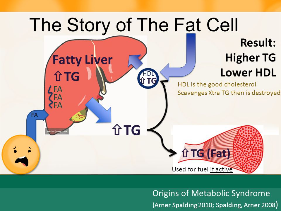 The Story of The Fat Cell  FAT High TG, Low HDL Hypertension Diabetes =Metabolic Syndrome Insulin Resistance  FAT
