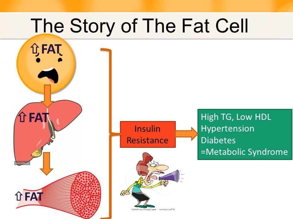 Insulin Resistance = Metabolic Syndrome Body Type & Risk The Story of The Fat Cell
