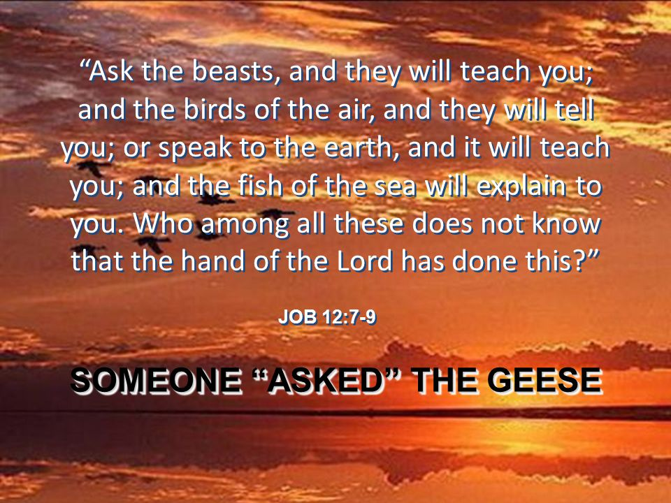 Ask the beasts, and they will teach you; and the birds of the air, and they will tell you; or speak to the earth, and it will teach you; and the fish of the sea will explain to you.