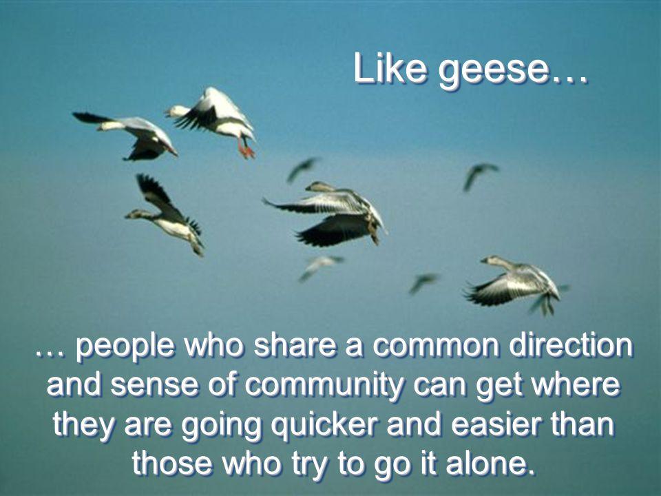 … people who share a common direction and sense of community can get where they are going quicker and easier than those who try to go it alone.