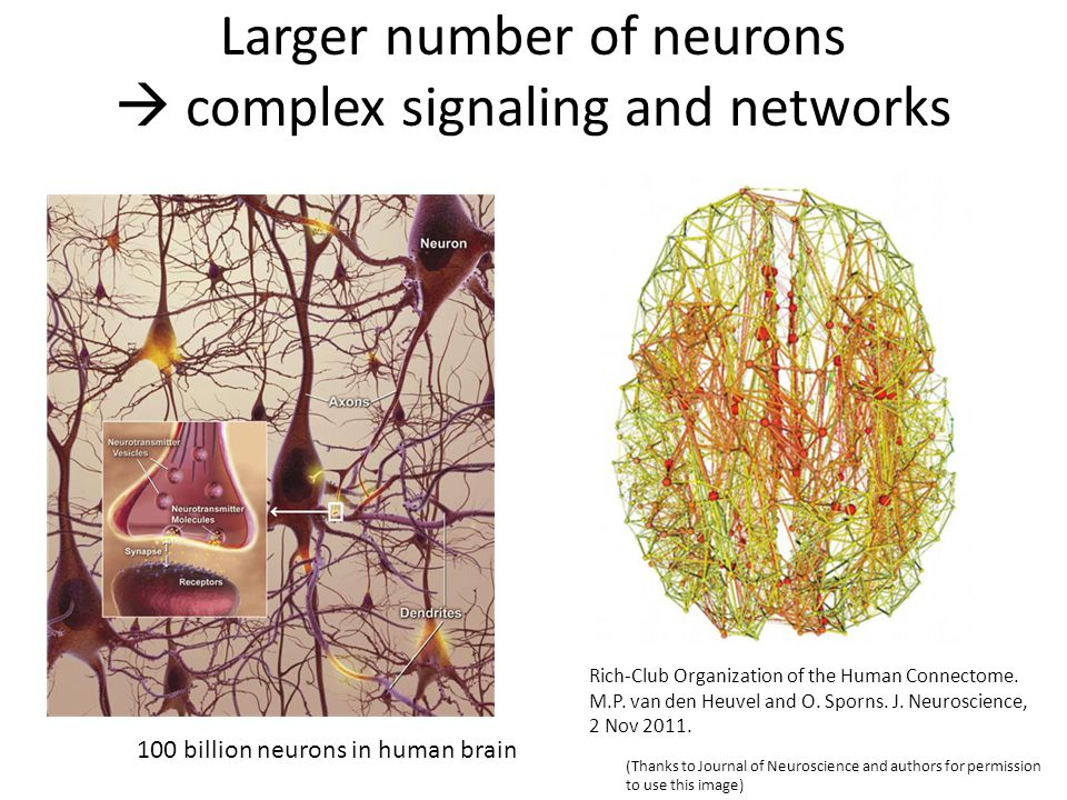 … it is intolerable that we do not have this information [connectional map] for the human brain.