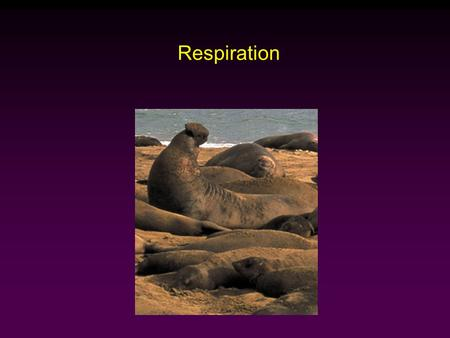 Respiration. Raven - Johnson - Biology: 6th Ed. - All Rights Reserved - McGraw Hill Companies Outline Fick's Law of Diffusion How Animals Maximize Rate.