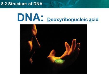 8.2 Structure of DNA DNA: Deoxyribonucleic acid. 8.2 Structure of DNA DNA is composed of four types of nucleotides. DNA = long chain of nucleotides. Each.