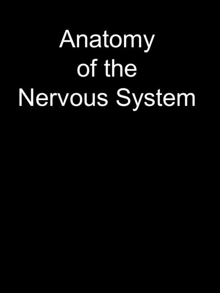 Anatomy of the Nervous System. I. Cells 4. Transmit information to target cell (neuron, muscle, gland) Four functions of neurons 1. Receive and integrate.