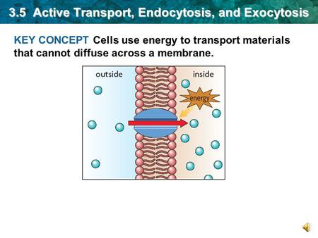 KEY CONCEPT Cells use energy to transport materials that cannot diffuse across a membrane. 3.5 Active Transport, Endocytosis, and Exocytosis.