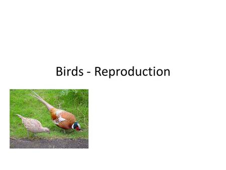 Birds - Reproduction. Differences between male and female birds Different reproductive organs. Many males have ornamentation. More impressive appreance.