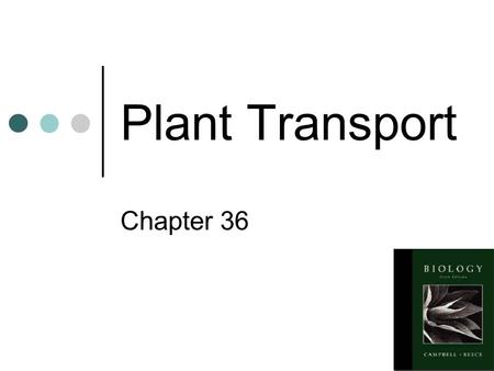 Plant Transport Chapter 36. Overview of Transport Water leaves the plant via transpiration Oxygen leaves the plant through leaves Sugars move down into.