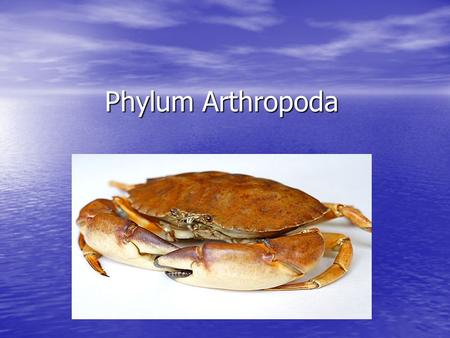 Phylum Arthropoda. Characteristics About 1 million species known, mostly marine About 1 million species known, mostly marine Artho- means joint/ pod means.