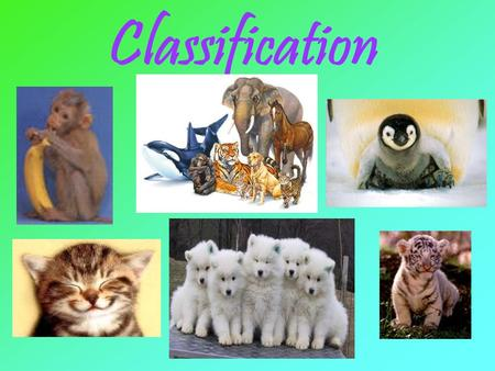 Classification. Taxonomy is the science of grouping and naming organisms. a.k.a. – the science of classification Classification the grouping of objects.