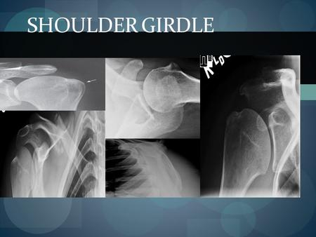 Shoulder girdle.